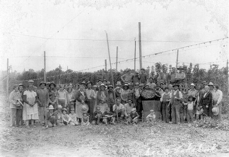 Block family working in the hop fields in the 1920s. Courtesy of Kimberlee Henkel-Moody.